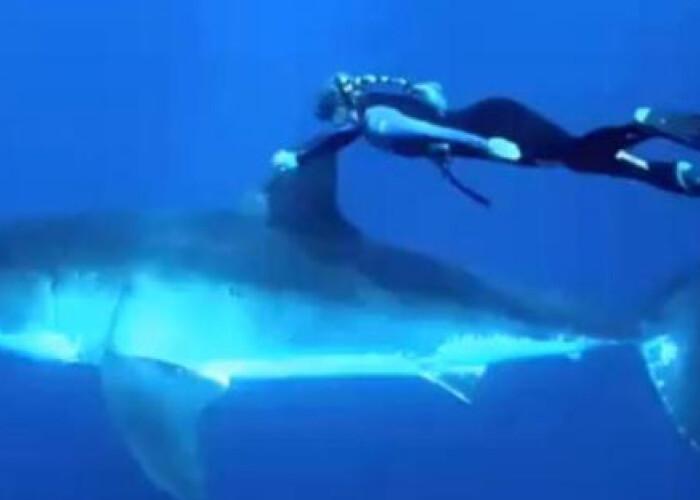 Curaj fara margini: Cum inoata o femeie alaturi de un rechin: VIDEO