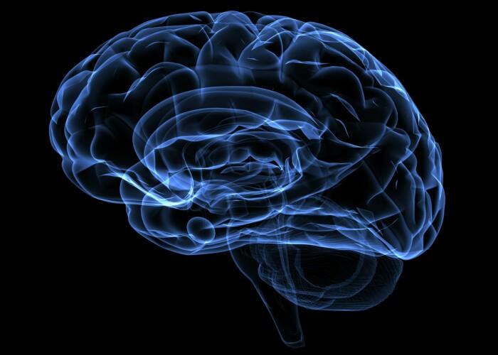 Cercetatorii au descoperit o zona a creierului necunoscuta pana acum: Uite care este rolul ei: