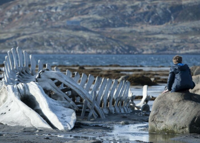"""Leviathan"""" – filmul anului in Rusia, nominalizat la Oscar, din 13 martie in cinematografe! VIDEO"""