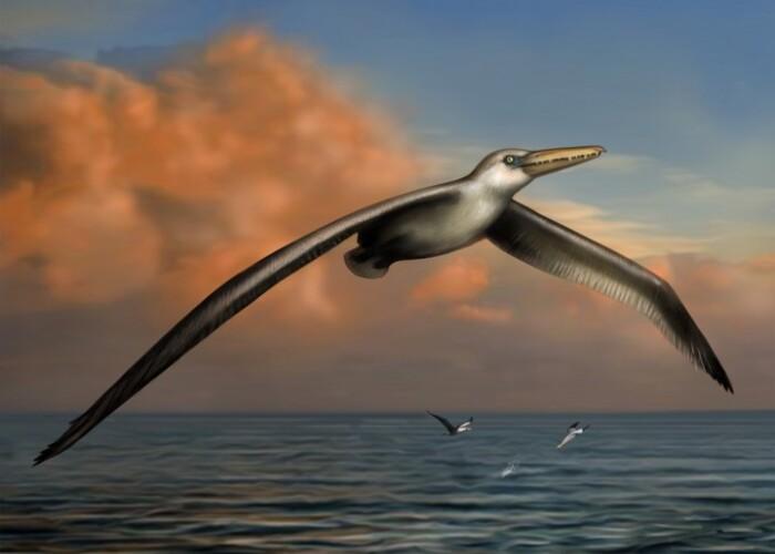 Noua descoperire despre cea mai mare pasare marina din istorie! VIDEO