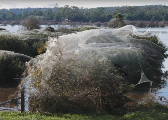 Ploua cu paianjeni! Fenomen extrem de rar in Australia! Ce s-a intamplat in doar cateva ore
