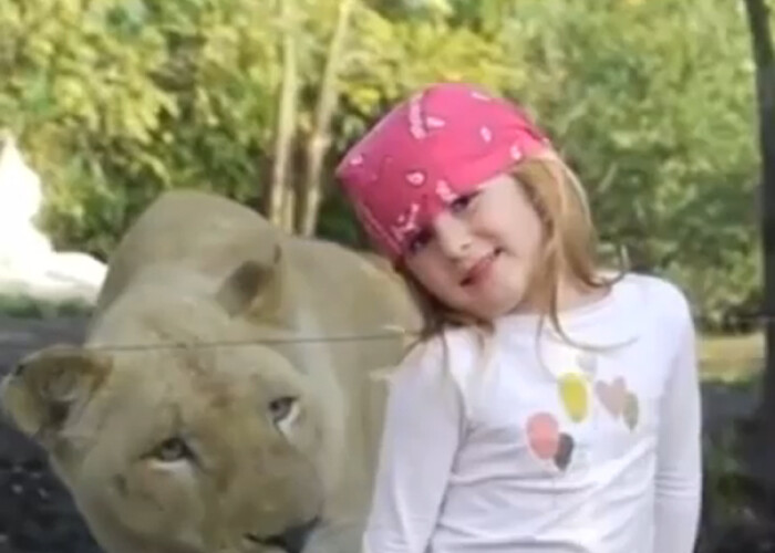 A tras probabil cea mai mare sperietura a vietii: Uite cum a reactionat aceasta fetita in fata unei leoaice VIDEO