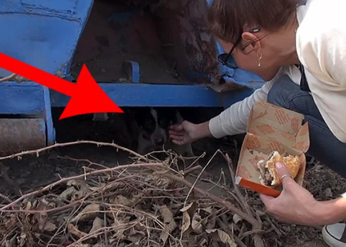 A trait 11 luni sub o masina: Cum a reactionat un caine al strazii cand a fost salvat! VIDEO