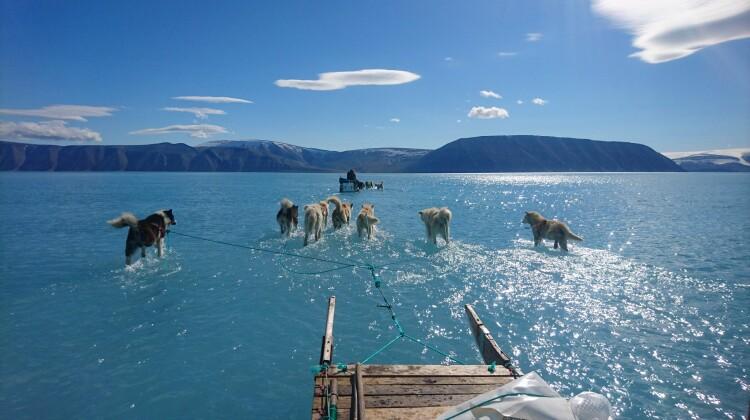 Câini de sanie care par că merg pe apă în Groenlanda. Poza face înconjurul lumii