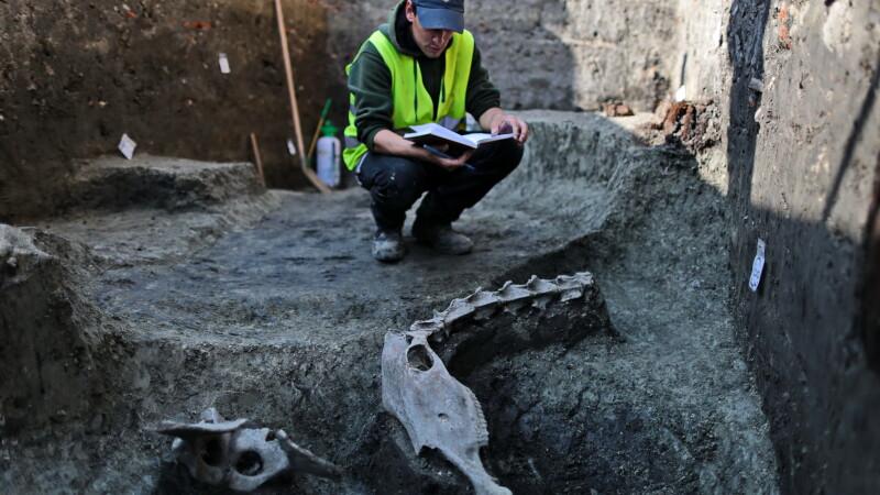 Fragmente din scheletul unui ANIMAL de talie marie au fost descoperite la Timisoara: