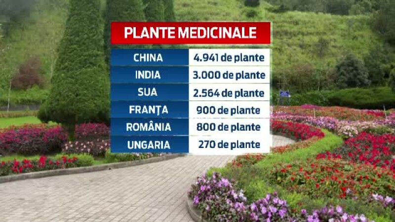 ceai, plante