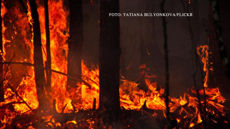 incendiu de vegetatie in Siberia