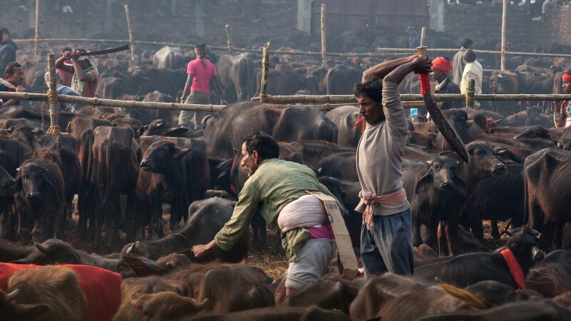 Festival religios in Nepal - GETTY