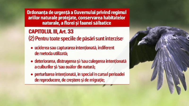 Timisoara vrea sa atraga turistii straini cu... ciorile. Propunerea stranie a Muzeului Banatului: \