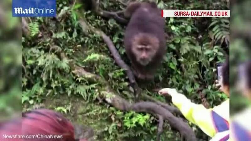 A vrut sa ii dea de mancare, dar maimuta a preferat sa ii ia telefonul. Moment amuzant la o gradina zoologica din China