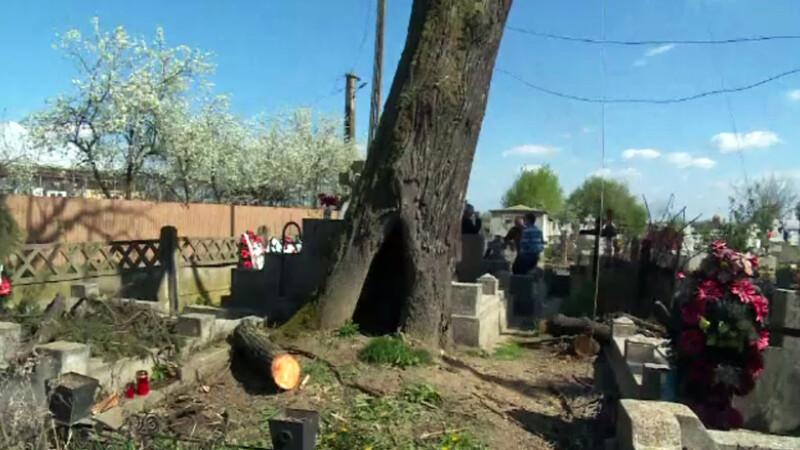 cazut din copac in cimitir