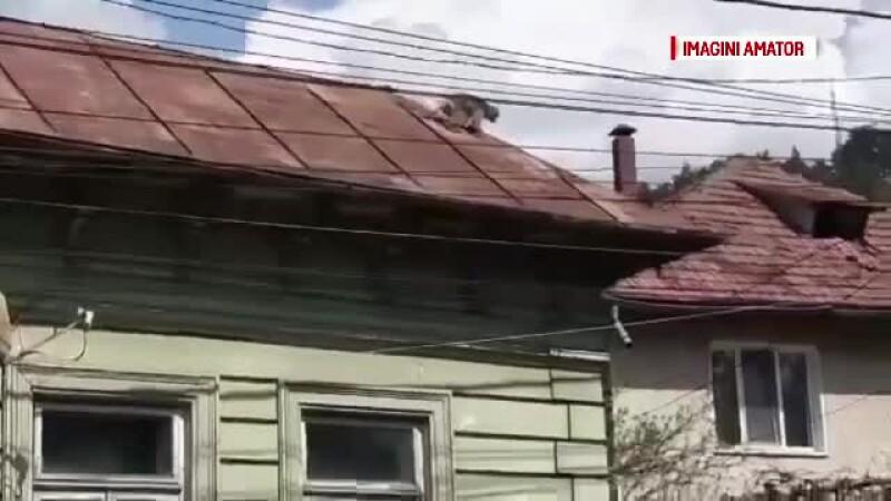 maimuta evadata