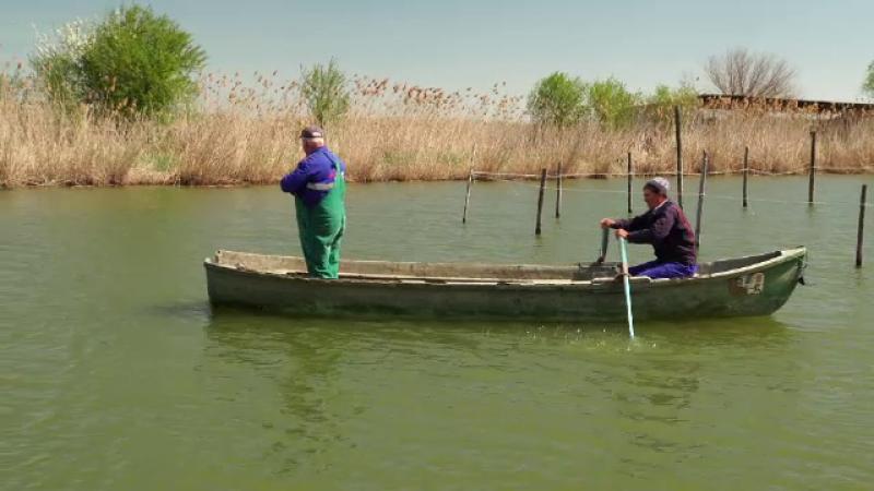 Situaţie alarmantă în Rezervația Biosferei Delta Dunării. Specia pe cale de dispariție