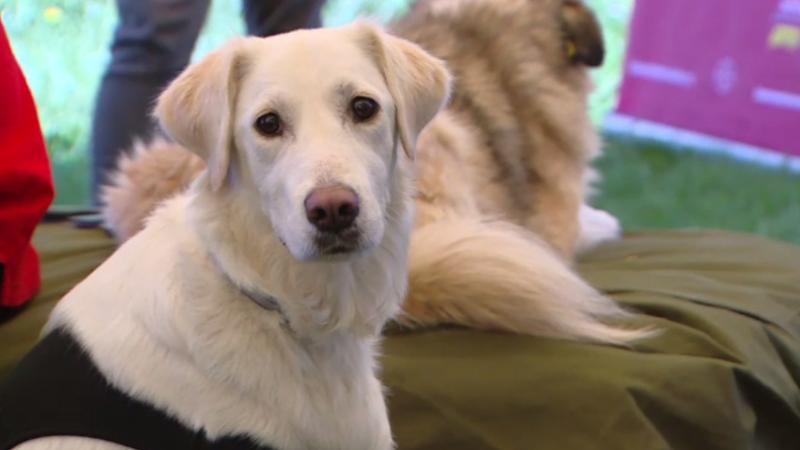 Câini îngrijiți de deținuți, dați spre adopție la un târg. Beneficiile programului
