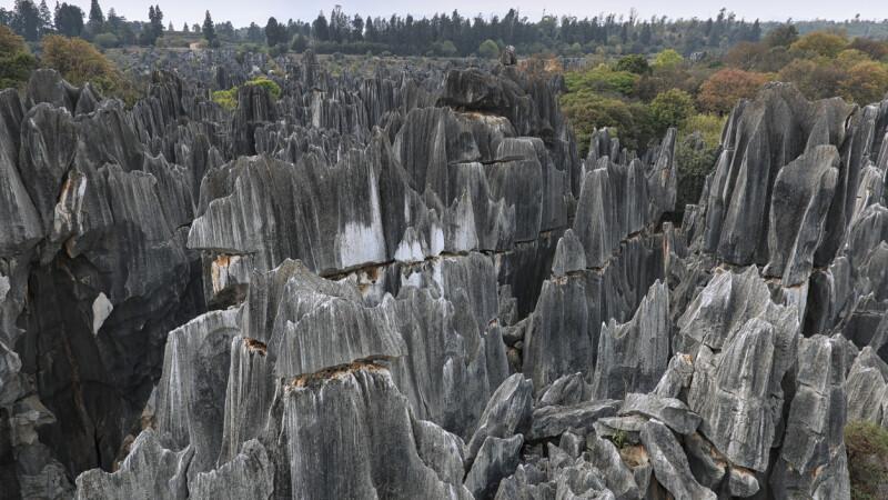 Cum arată Pădurea de Piatră. S-a format în urmă cu milioane de ani. GALERIE FOTO