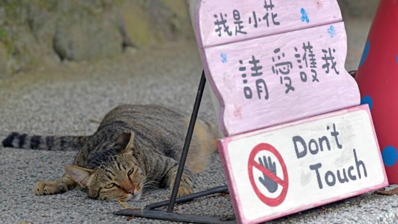 Povestea satului căzut în uitare, salvat de pisici. Acum e o populară destinație turistică - 10
