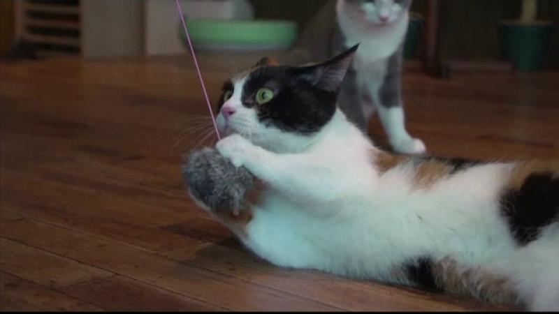 Dupa 8 luni de studiu, cercetătorii au aflat că pisicile reacționează când le spui numele