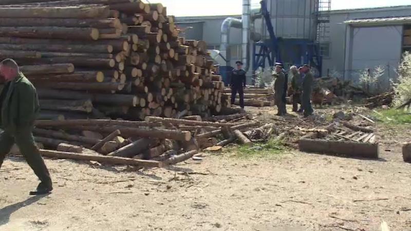 Perchezitii la depozitele de lemn