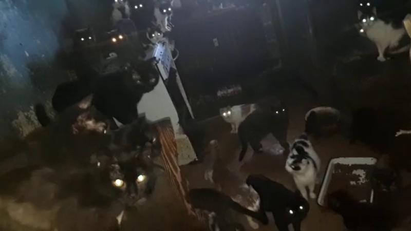 41 de pisici ţinute în beznă într-o bucătărie de apartament. Explicaţia proprietarilor