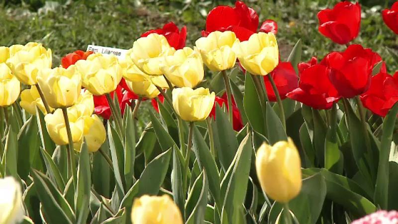 Spectacol de culoare în Grădina Botanică din Cluj. Vizitatorii au rămas muți de uimire