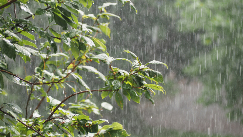 vremea, ploaie