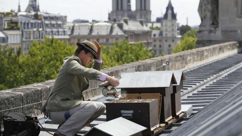 """Cum au supraviețuit incendiului de la Notre Dame albinele de pe acoperiș: """"E un miracol"""""""