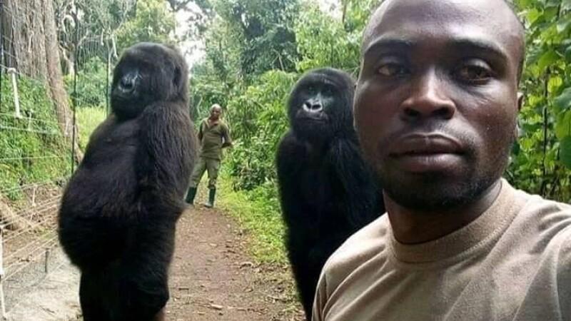 selfie gorile
