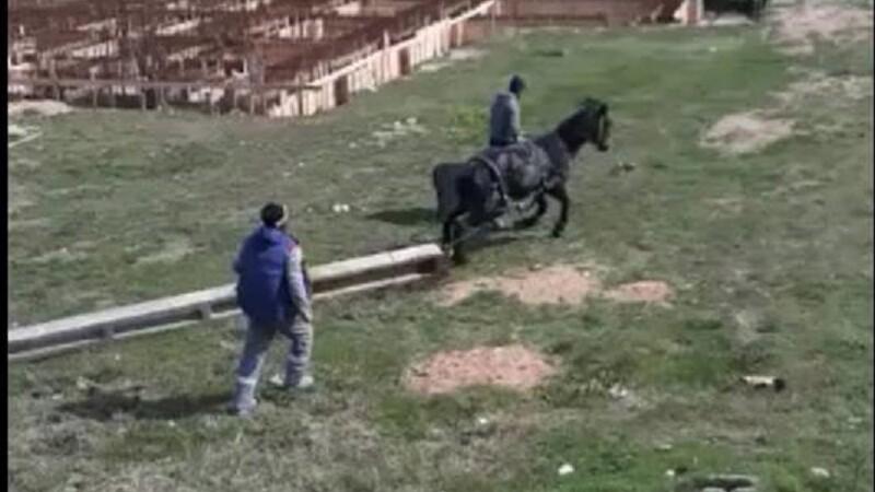 Cal forțat de stăpân să care un stâlp de beton de jumătate de tonă