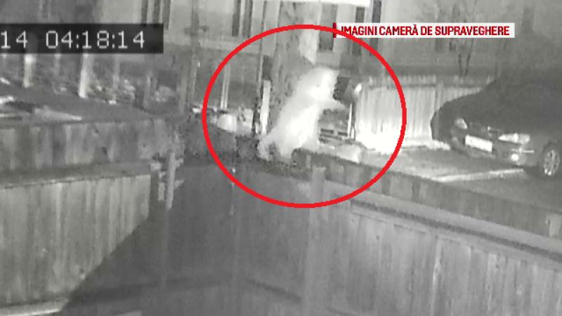 Momentul în care o pisică este furată de un taximetrist din Bacău. Reacția stăpânilor