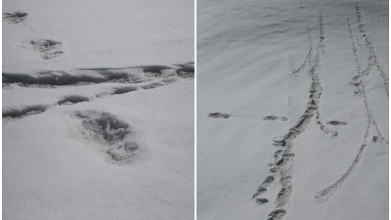 Armata indiană a anunțat că a găsit urme ale lui Yeti