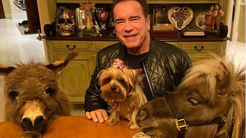 Arnold strânge bani cu ajutorul lui Lullu și Whiskey. Cum vrea să îi ajute pe cei afectați de coronavirus