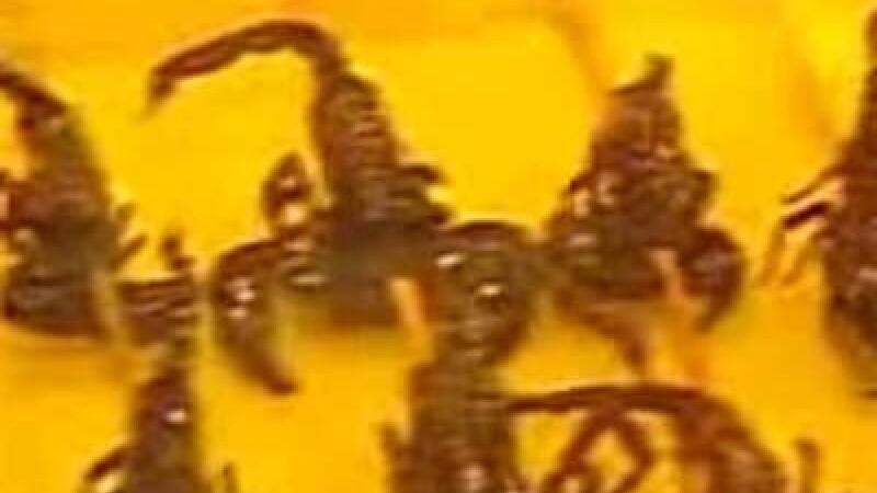 Veninul de scorpion, leac impotriva cancerului
