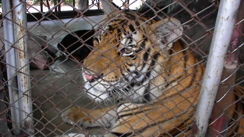 Grădinile zoologice din România