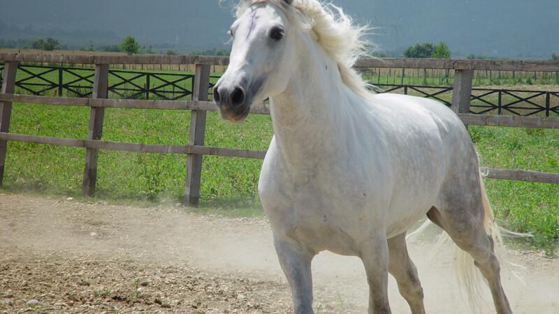 Attractive... horse