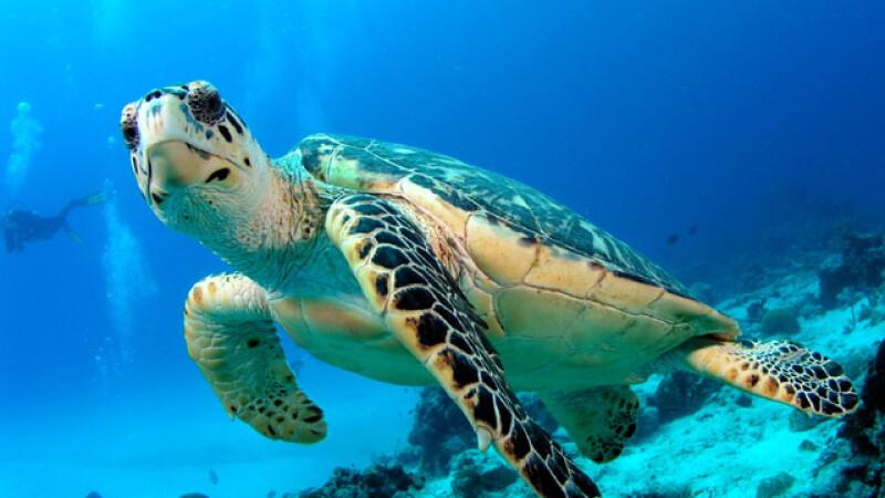 broaşte ţestoase