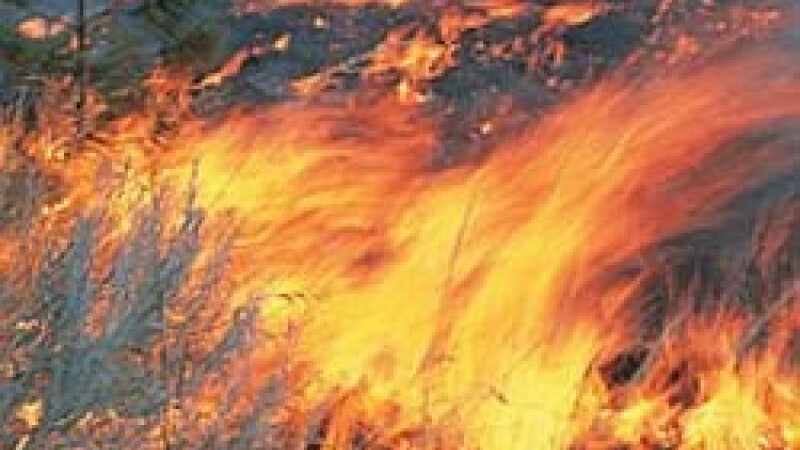 Incendiu de proportii in Gorj. Au ars doua hectare de vegetatie