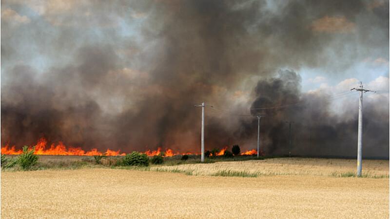 Un incendiu devastator a distrus hectare intregi de camp