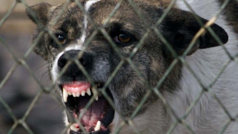 Doi batrani din SUA au murit sfasiati de o haita de caini salbatici!