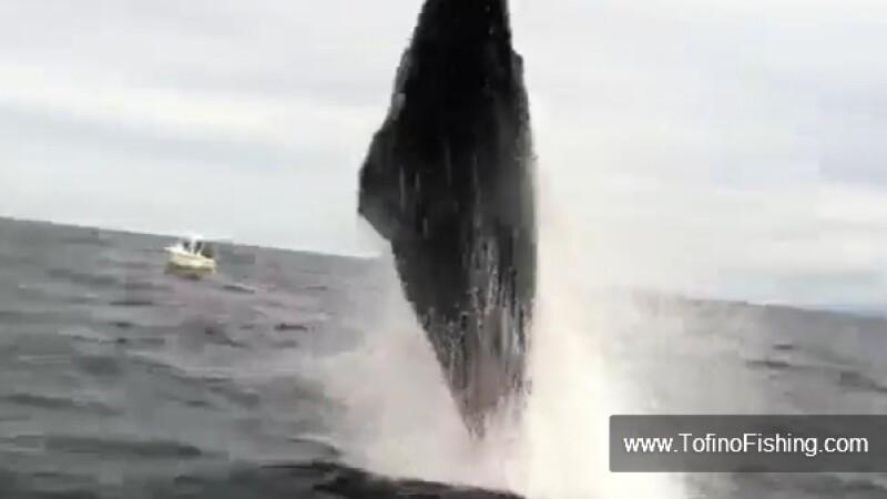balena care sare
