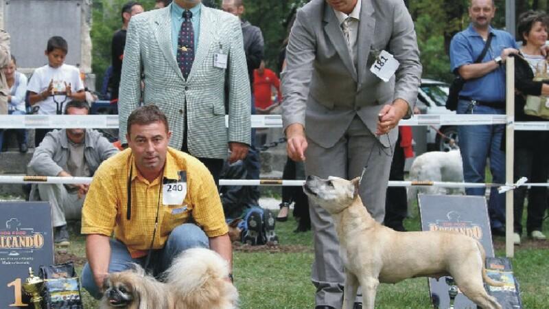 expozitie canina
