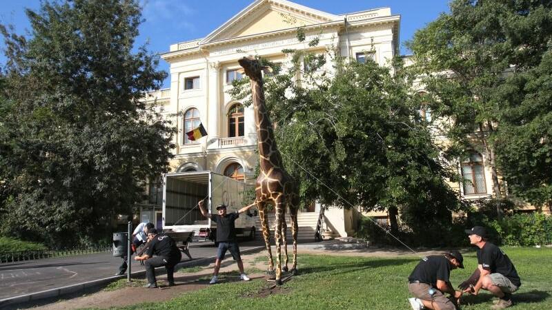 Girafa Antipa