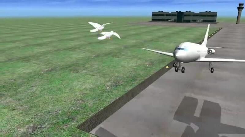 avion, pasari