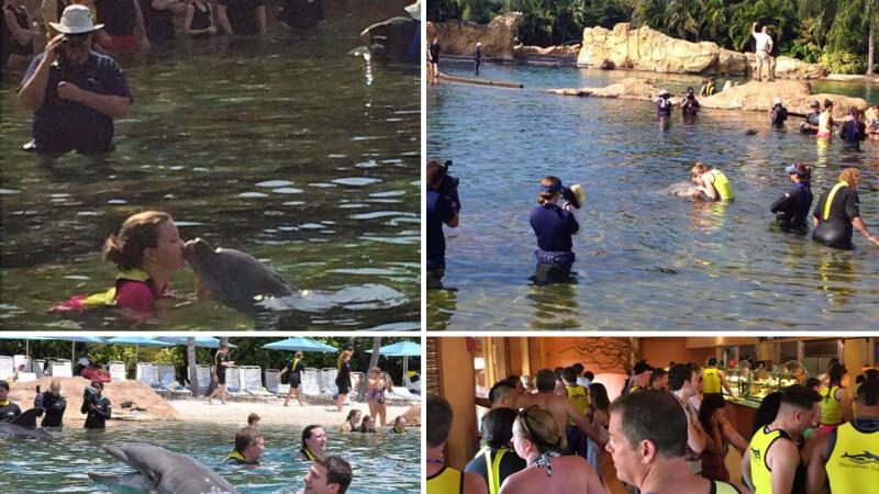 inoti cu delfinii