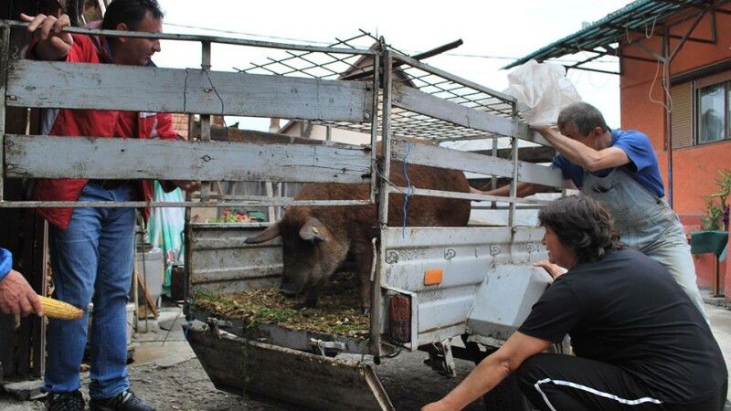 """Fermierii clujeni, incurajati sa revina la cresterea raselor """"rustice"""" de animale domestice"""