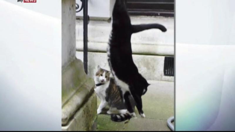 pisici in guvernul britanic