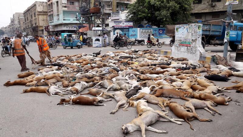 Tablou macabru intr-un oras pakistanez. Autoritatile au otravit peste 700 de caini maidanezi si i-au lasat pe strada. FOTO