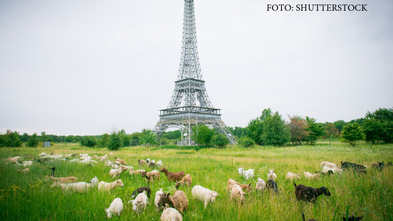 tunrul Eiffel de la Slobozia, capre pascand alaturi