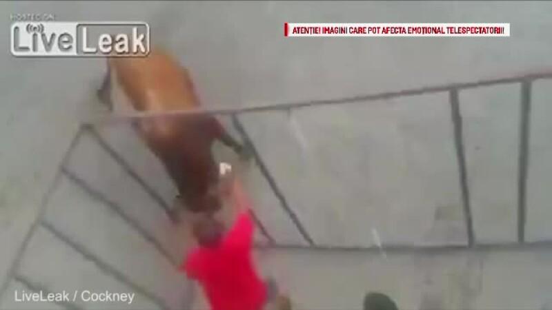 atacat de taur