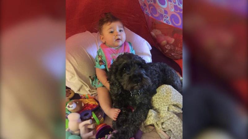 O fetita de 8 luni a fost salvata de cainele ei dintr-un incendiu, insa el a murit. Povestea emotionanta a lui Polo
