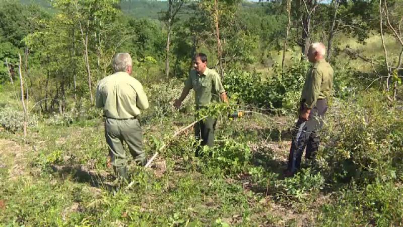 """Pădurari din Gorj acuzați că au defrișat o pădure particulară. """"Din greșeala"""""""